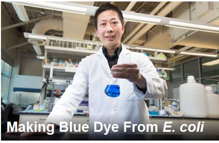 Making Blue Dye From E. coli