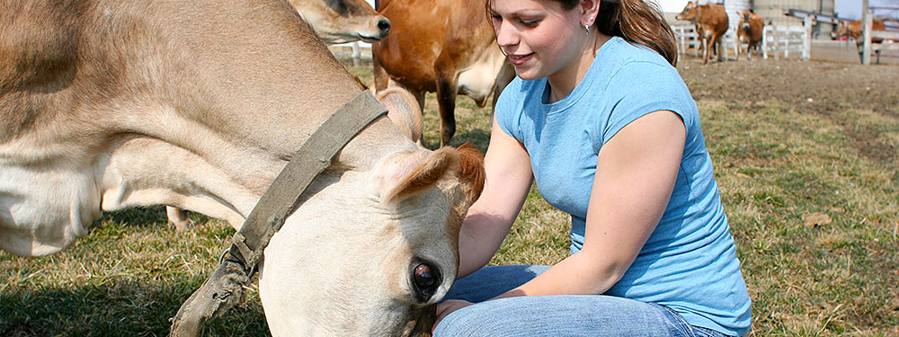 animal science thesis The master of animal science (mas) non-thesis degree program is designed to give students a deeper academic background in sub-disciplines associated with the field of animal science which include nutrition, physiology, genetics, biotechnology and animal management.