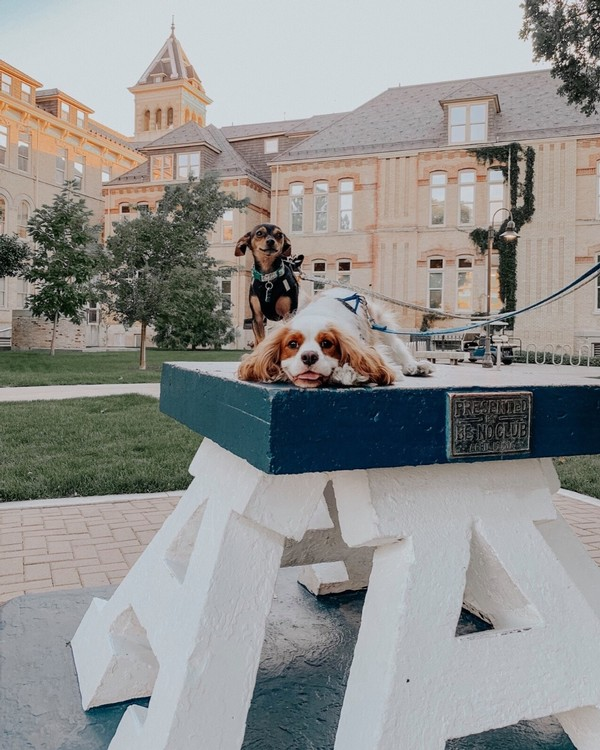 Two puppies sit atop the Block A at Old Main