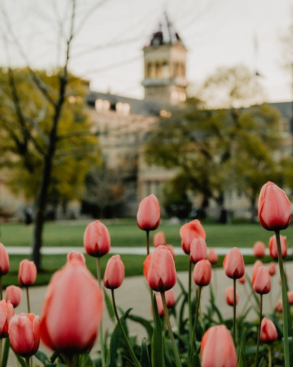 Flowers bloom in front of Old Main