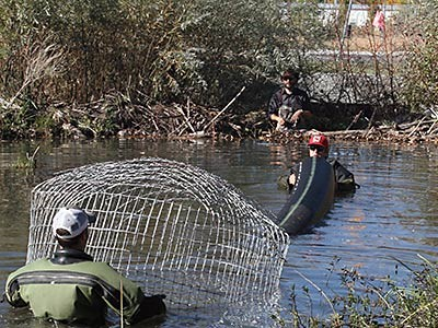 USU researchers work with a pond leveler in a beaver pond