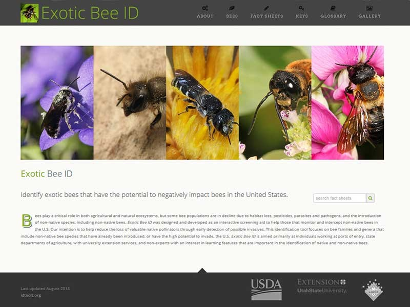 Screenshot of online Exotic Bee ID guide