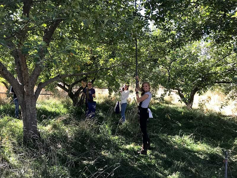 volunteers in an apple orchard
