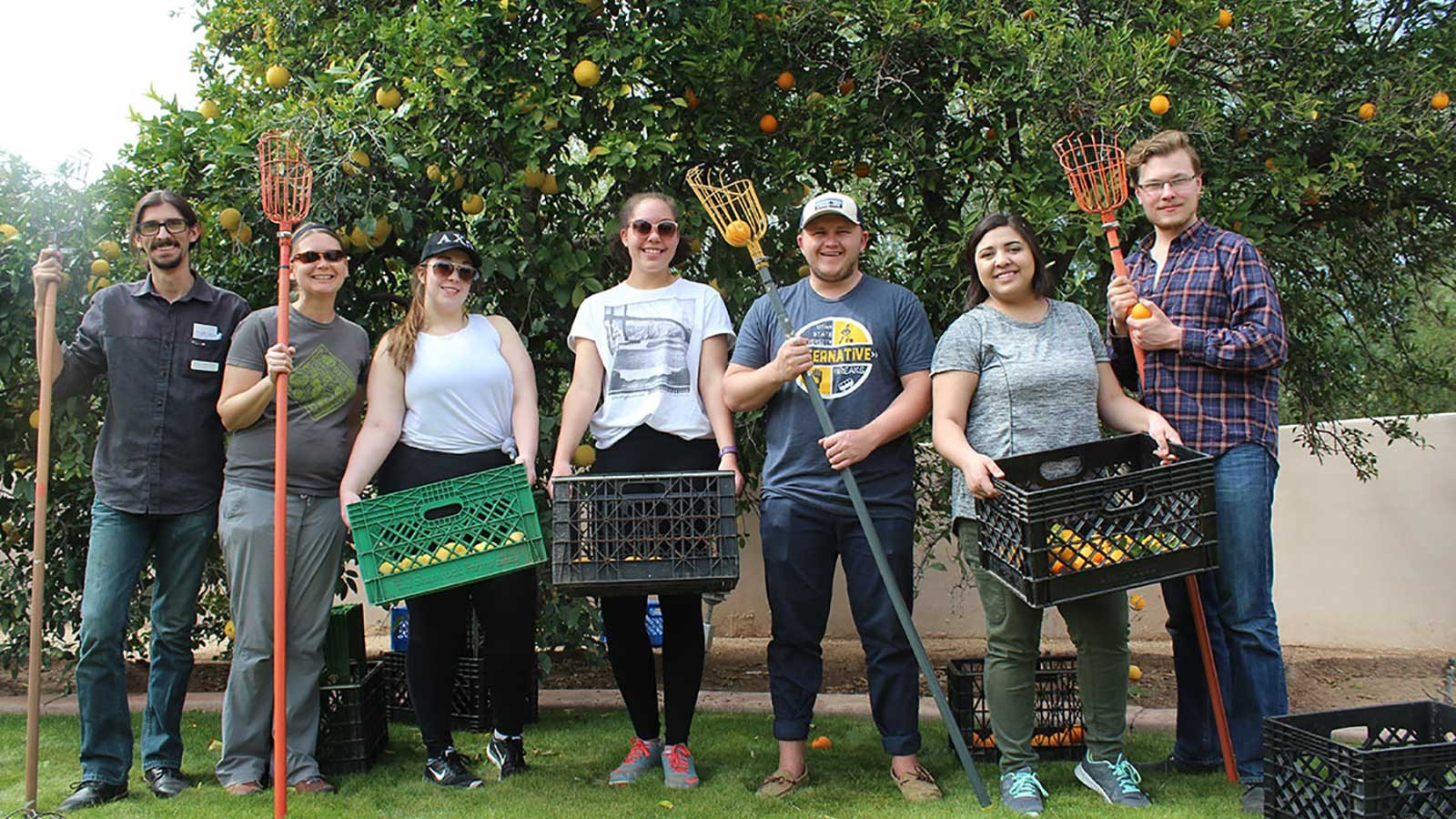 USU students picking fruit as part fruit and vegetable gleaning program.