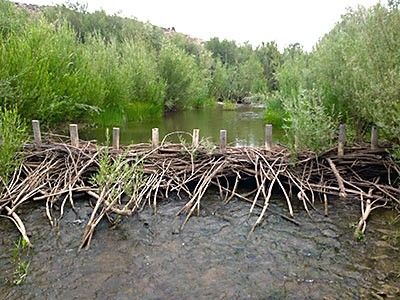 Beaver dam analog on Oregon's Bridge Creek