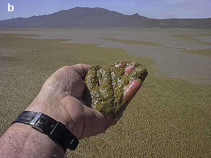 Bloom of the cyanobacterium (Nodularia) in Farmington Bay of the Great Salt Lake
