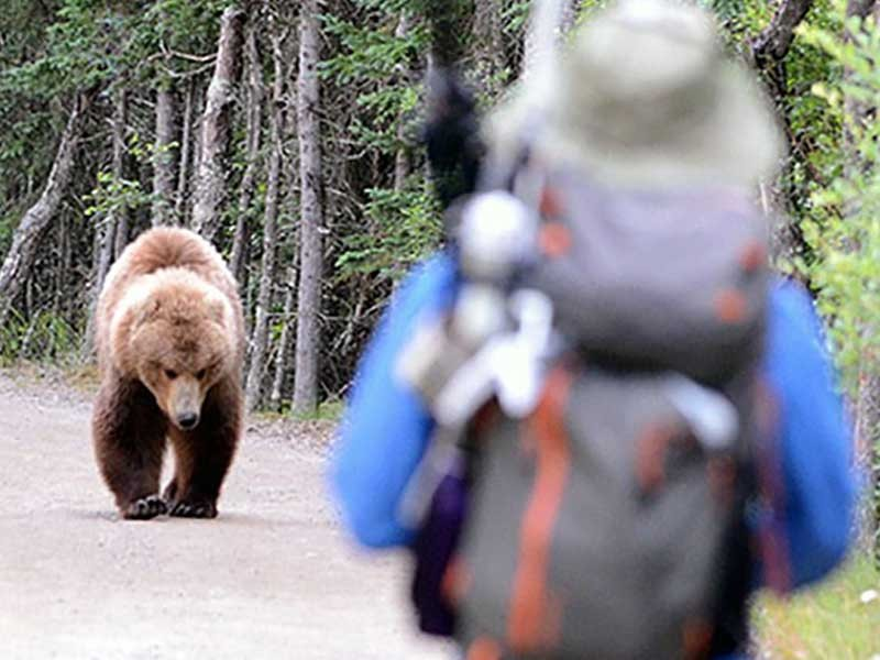 bear approaching a hiker in the wilderness