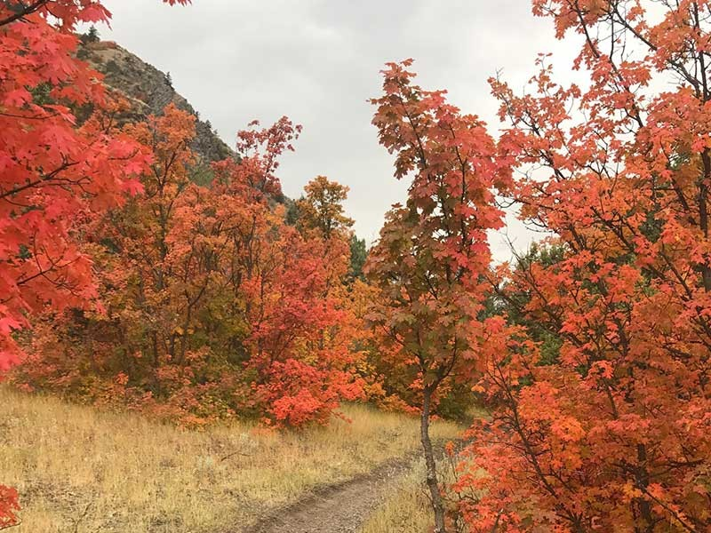 Ask An Expert: What Causes Autumn Leaves To Change Color?