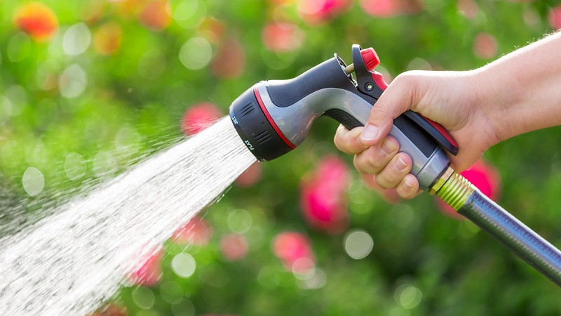 Person watering their yard.