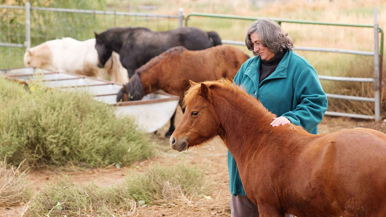 Lesa Minnick with her horses.